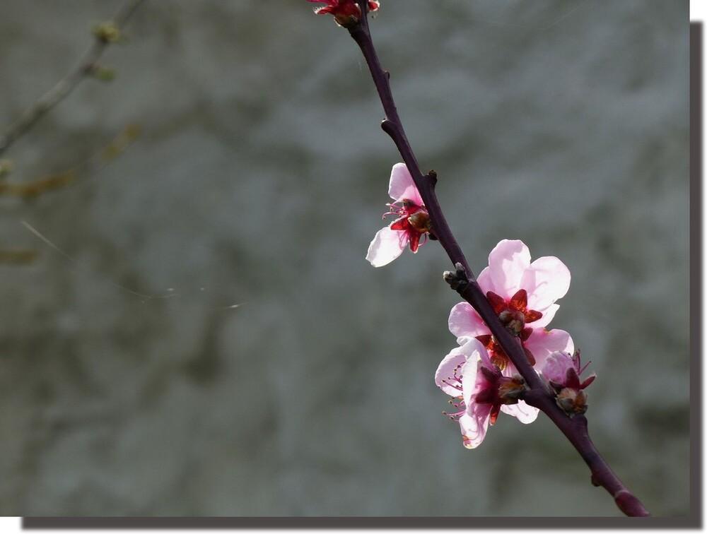 si la pluie ne fait pas couler la fleur