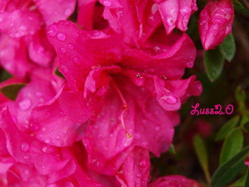 Dans mon jardin #