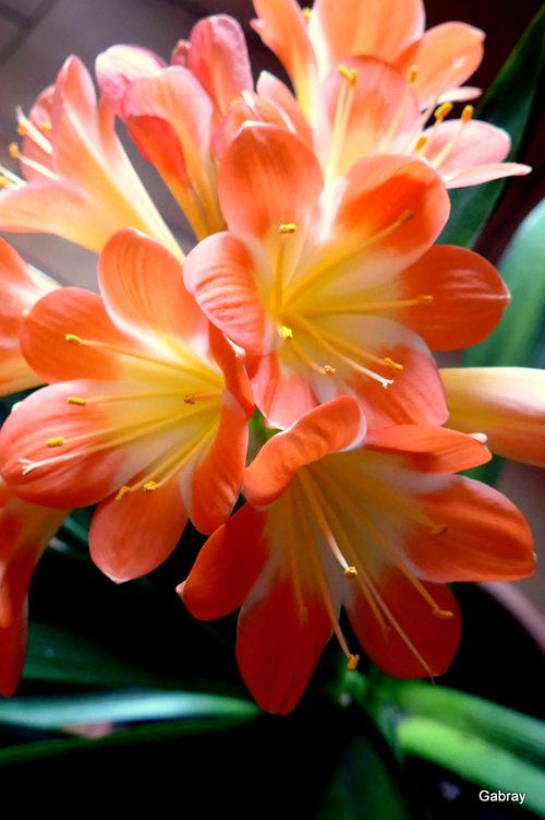 Mes fleurs d'intérieur ...