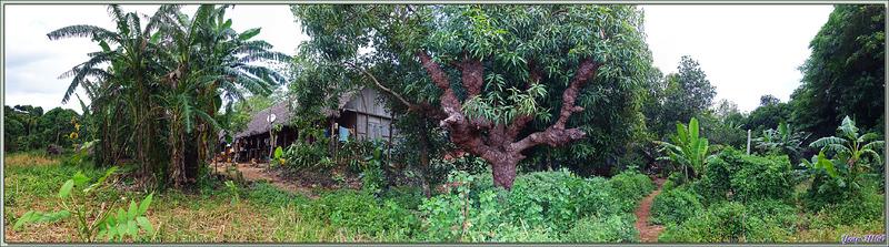 Promenade dans la forêt de Nosy Sakatia : Grande habitation traditionnelle (peut-être communautaire) - Madagascar