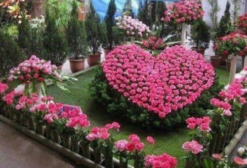 Au coeur de mon jardin