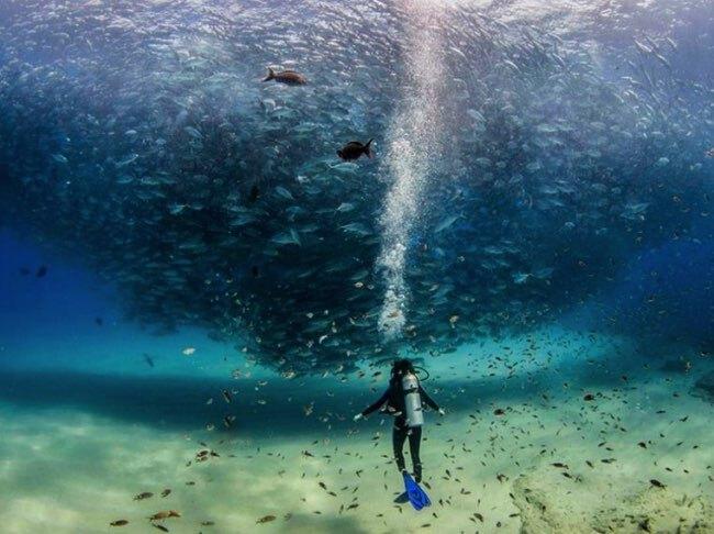 national geographic plus belle photos 2015 16 - 20 Photos Préférées du National Geographic sur Internet en 2015