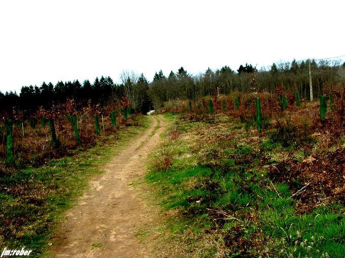 Weekend en forêt pour cette 8ème journée internationnale