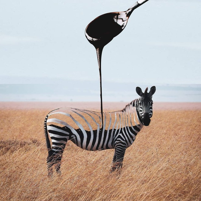 photo manipulation zebra