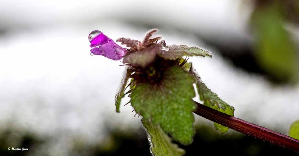 Gerbe fleurie