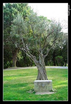 L' arbre de la tolérance ...