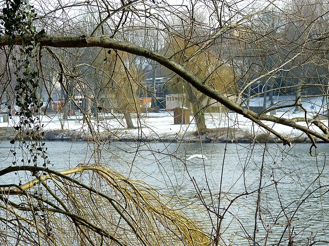 Bords de Moselle hiver 12 Marc de Metz 2012