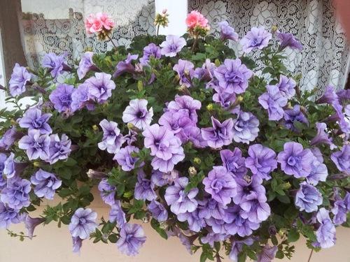 Fleurs d' été