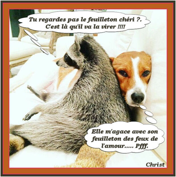 Famille Dog-Ratons.
