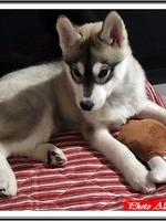 Nala (3 mois)