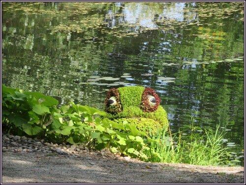 Petit coucou de l'étang.....