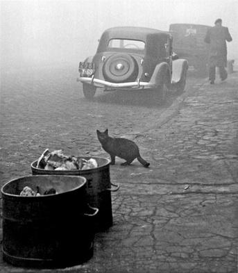 06 - Des chats dans la rue