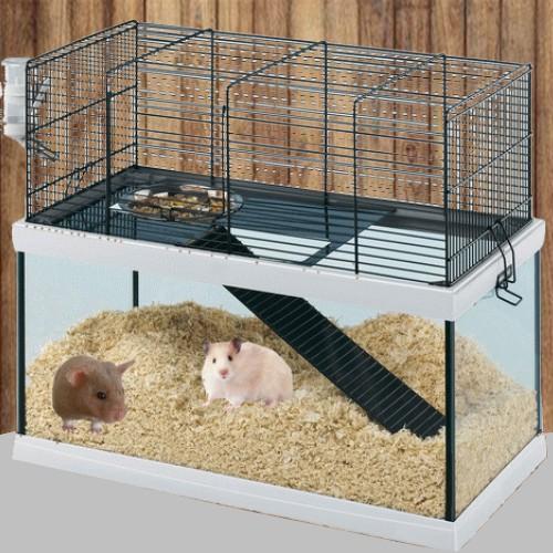 Mes Hamsters