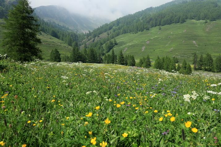 Piemont, alpage proche de Chianale