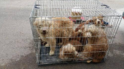 Sauvetage de 10 chiens dans un terrible état à Castilla la Mancha / UHDG