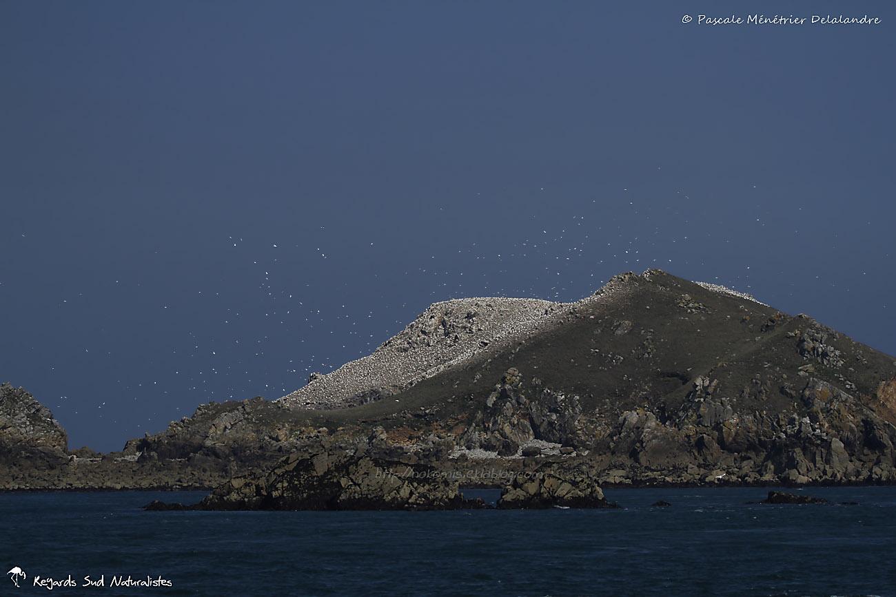 L'île aux Fous