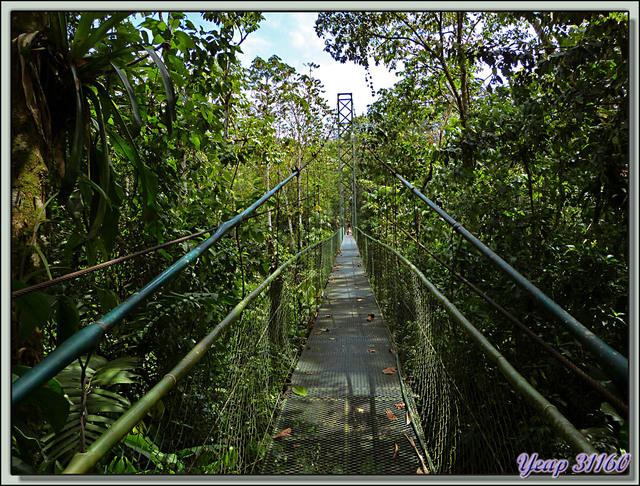 Blog de images-du-pays-des-ours : Images du Pays des Ours (et d'ailleurs ...), Pont de singe - Arenal - Costa Rica
