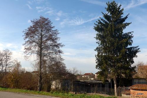Des arbres et la nouvelle année ...
