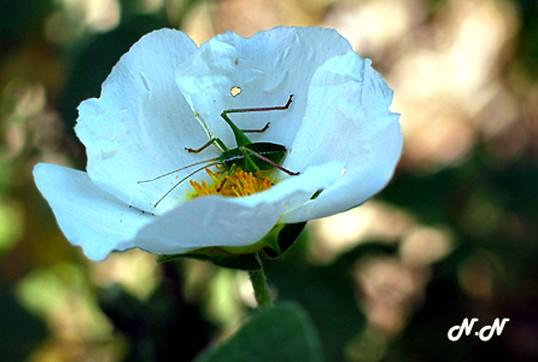 insecte-cyste.jpg