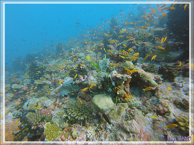 Aquarium - Moofushi - Atoll d'Ari - Maldives