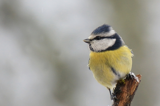 Des oiseaux en hiver