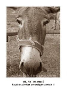 la mule 9 sepia am3