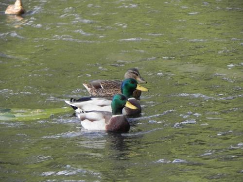 Photos du Parc Botanique de Brest