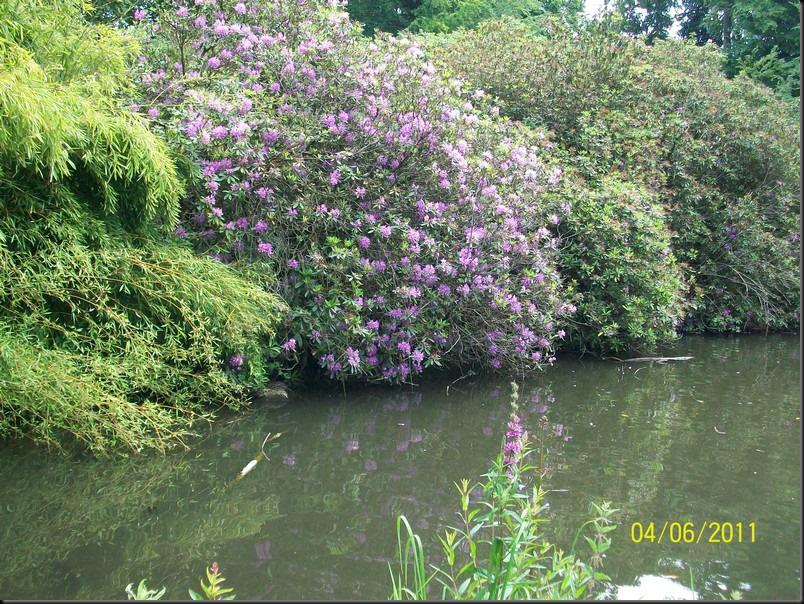 le parc arboretum de jumet004