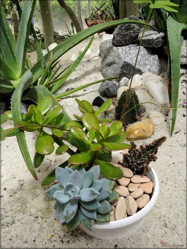 Photo de plantes grasses (serre des cactées)