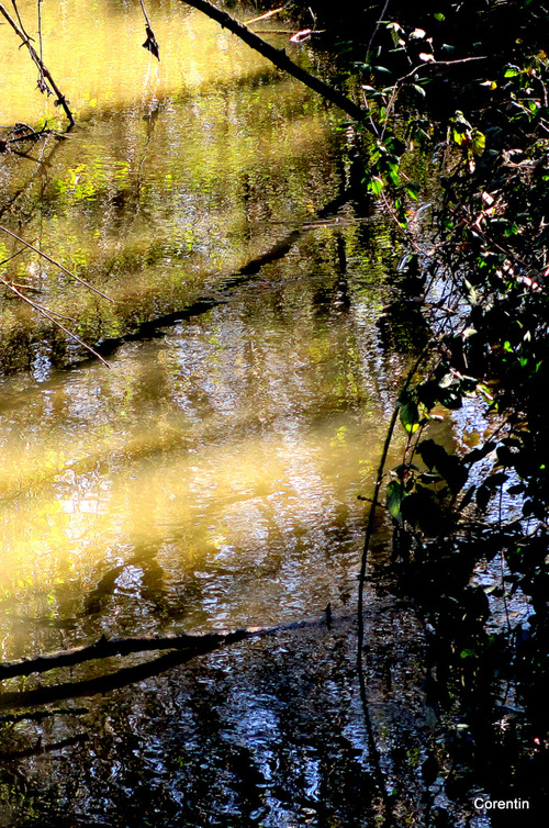 De l'eau et des reflets !