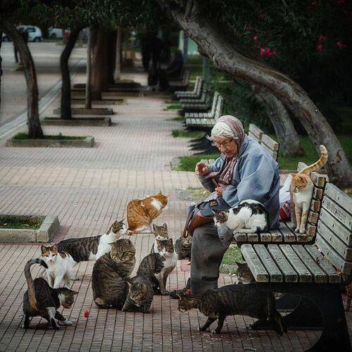11 - Vieilles femmes et chats encore