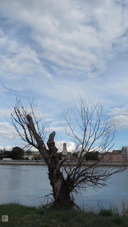 Squelette d'arbre sur le bord du Rhône
