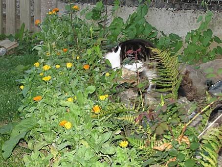 mes-animaux-de-compagnie-et-les-animaux-de-la-nature-6739.JPG