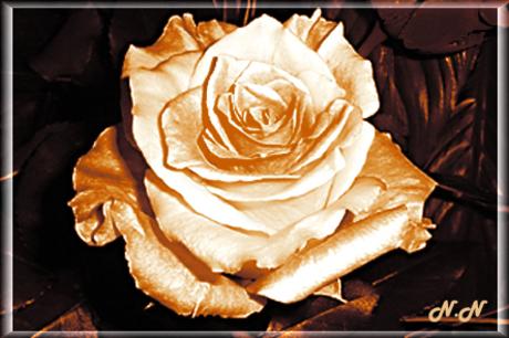 """Quand fleurissent les """"Je t'aime"""""""