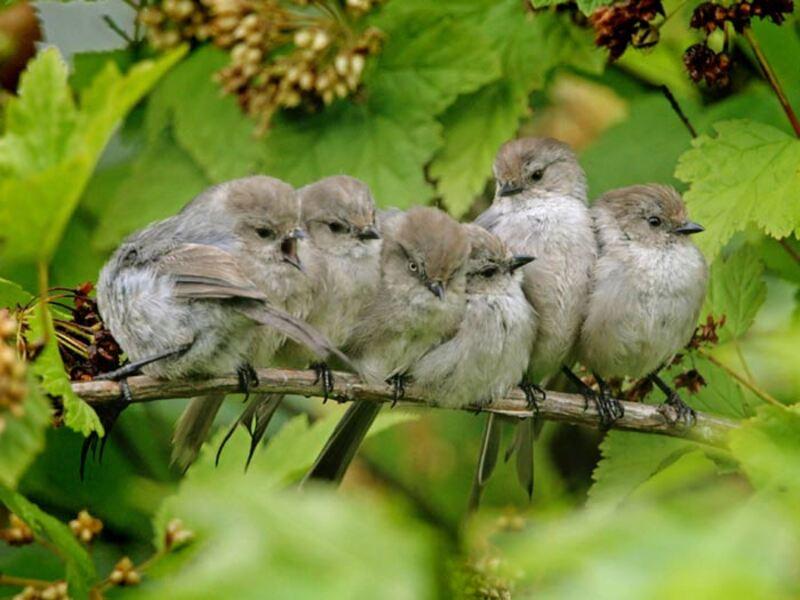 10 images d'Oiseaux #3