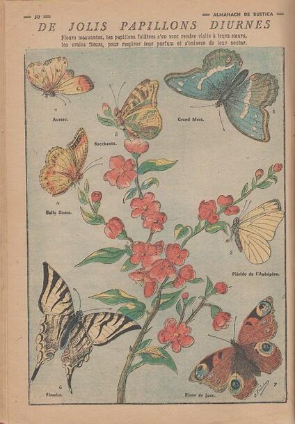 Planche papillons . Source almanach RUSTICA année 1948