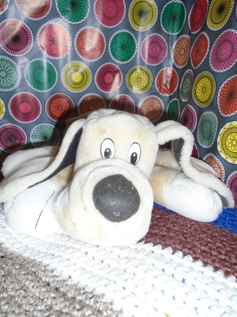 Odéon, petit chien de Belle