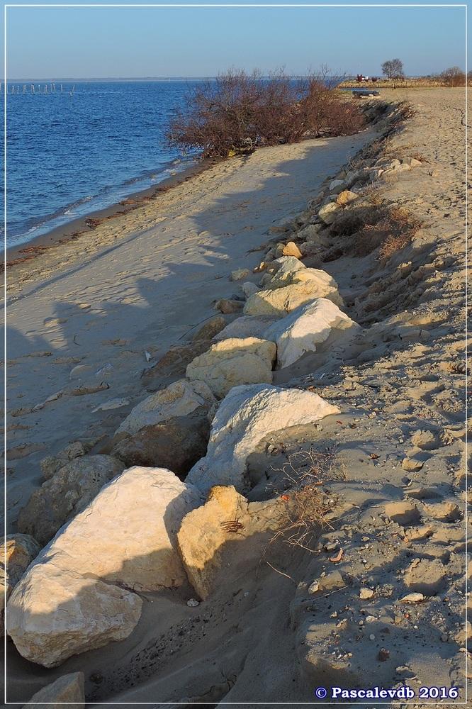 Port du Rocher et près salés est - La Teste de Buch - Février 2016 - 8/12