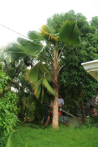 jardin-6640.JPG