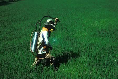 Indispensables à l'agriculture à fort rendement, les produits pesticides doivent être évalués quant à leurs effets sur la santé humaine et sur l'environnement. ©IRRI Images CC