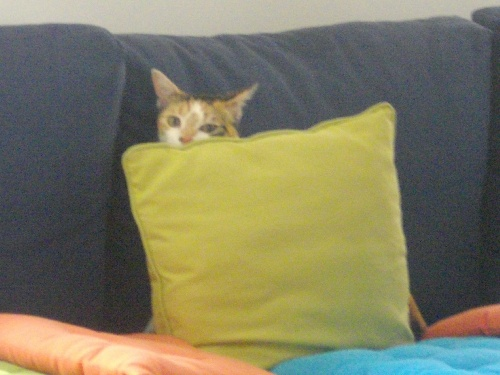 Le chat de liz