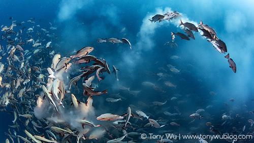 Tony Wu et ses photos sous-marines