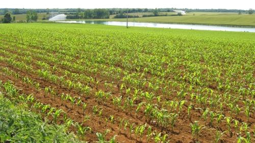 Irrigation agricole : la fuite en avant !