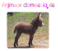 Cartes de nomenclature: animaux