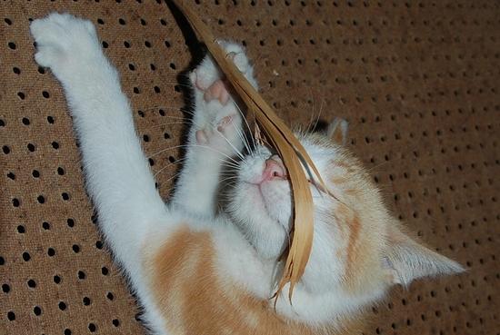 chaton18juilleti