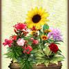 Bouquet pour l'Été