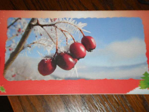 JANVIER 2011 003-copie-1