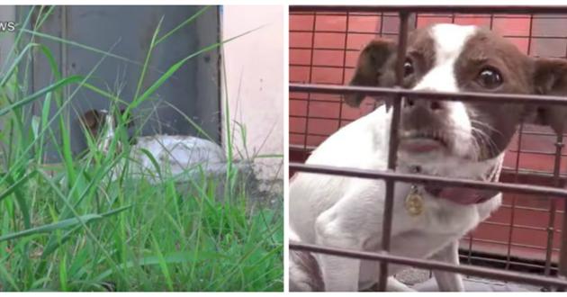 chienne abandonnée cage