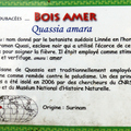 Bois amer (Quassia amara) – Habitation Depaz - Photo : Michaël