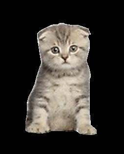 Tube chaton